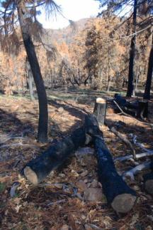 burned_trees_1559
